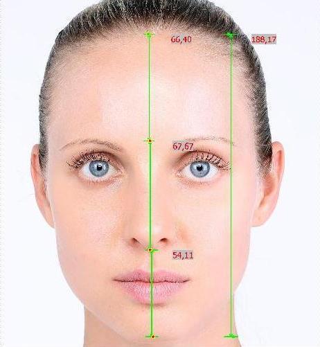 proporzioni del viso
